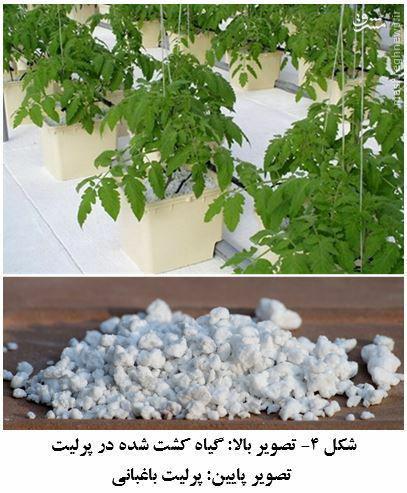 کِشت بدون خاک در مناطق کویری به صرفه تر است/کاهش 99 درصدی مصرف آب با کشت هیدروپونیک در ژاپن