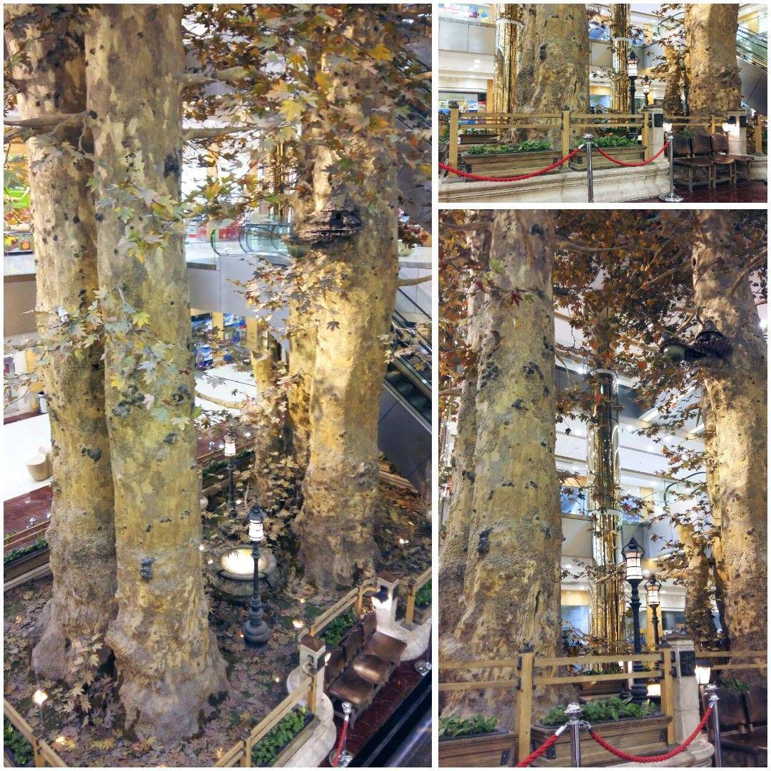 این درختها طبیعی نیستند! (عکس)