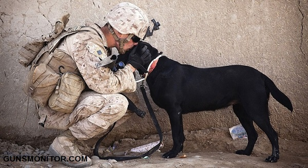 دانستنی هایی درباره سگ های نظامی! (+عکس)