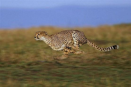 سریع ترین جانوران کره زمین (+عکس)