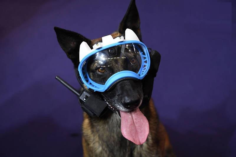 تجهیزات ویژه یک پلیس سگ (عکس)
