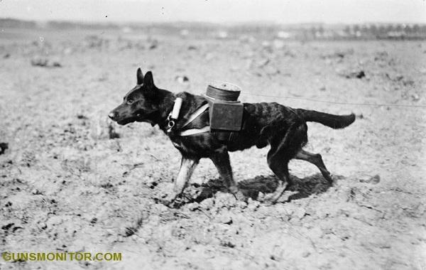 نگاهی بر سابقه حیوانات در میدان نبرد!(+عکس)
