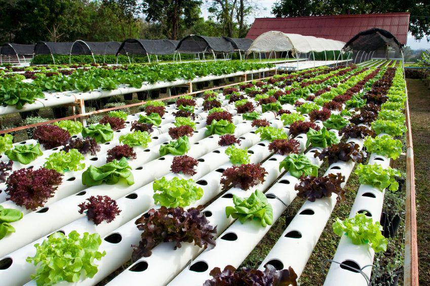 کشت هیدروپونیک، راهکار مقابله با بحران آب/ روش های افزایش چشمگیر تولید محصولات کشاورزی