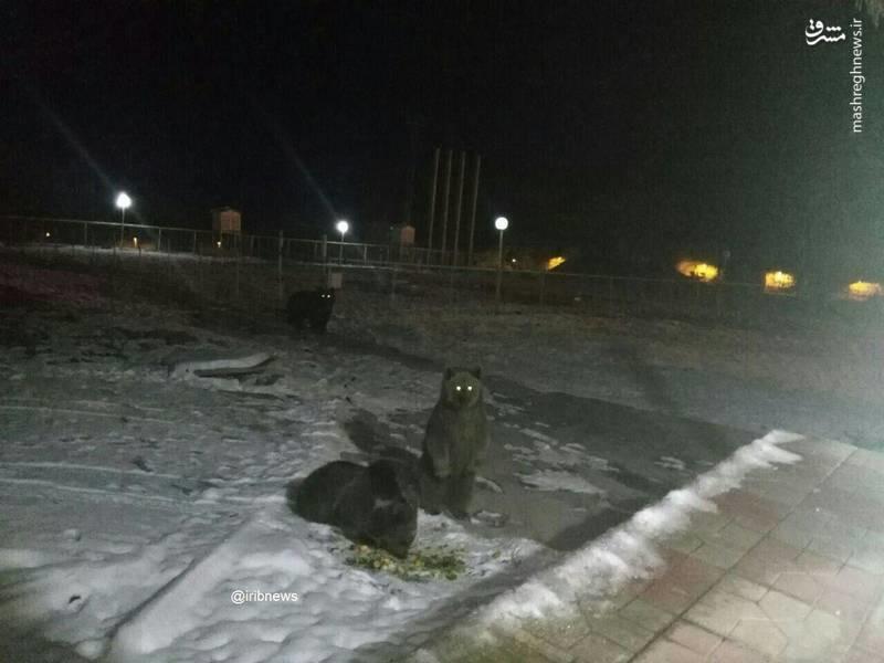 خرس مادر و فرزندانش در ایستگاه هواشناسی کندوان (عکس)