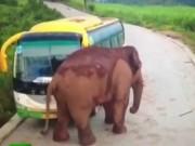 حمله فیل به وسایل نقلیه در استان یون نان چین (فیلم)