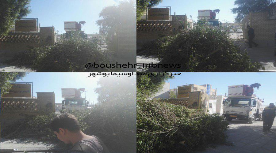 اتفاق عجیب در بوشهر (عکس)
