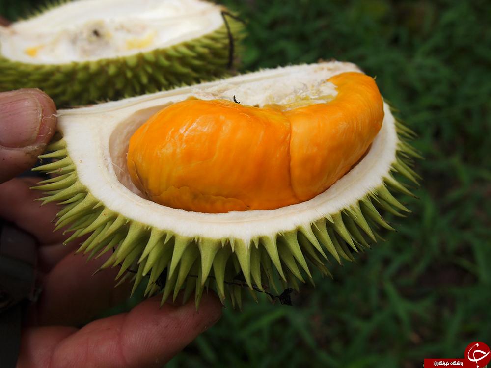 میوه ای با طعم بهشت و رایحه جهنم/پرطرفدارترین کالا بعد از آیفون x در چین (+عکس)