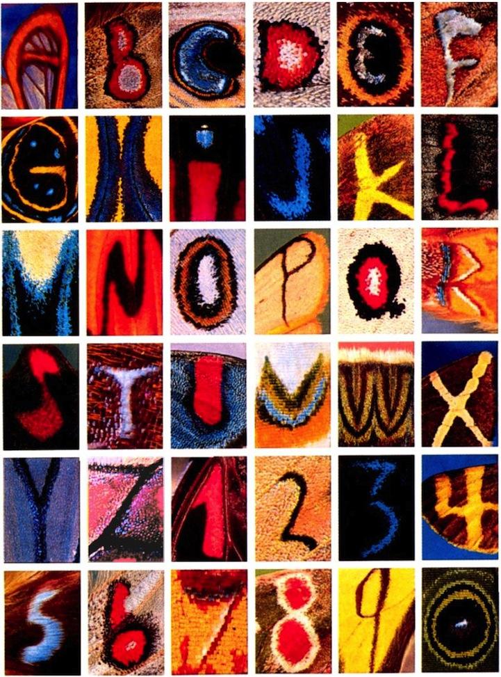 حروف و اعداد روی بال پروانهها! (+عکس)