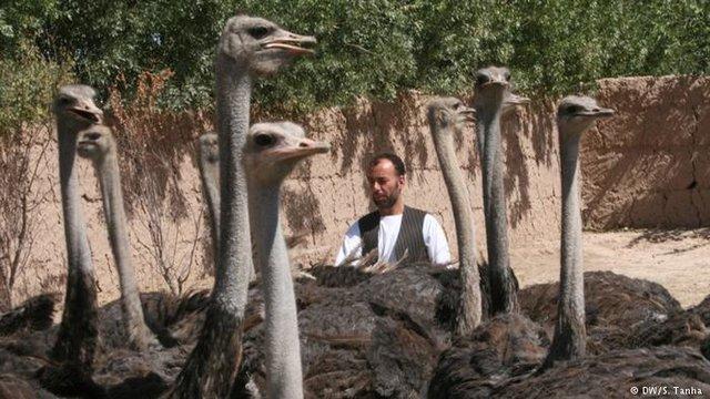 آشنایی با بزرگترین حیوانات دنیا (+عکس)