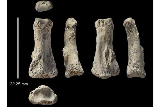 فسیل 88000 ساله در عربستان کشف شد (+عکس)