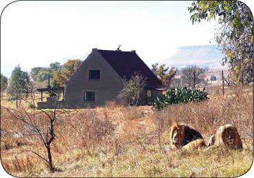 تعطیلات رویایی در میان شیرها