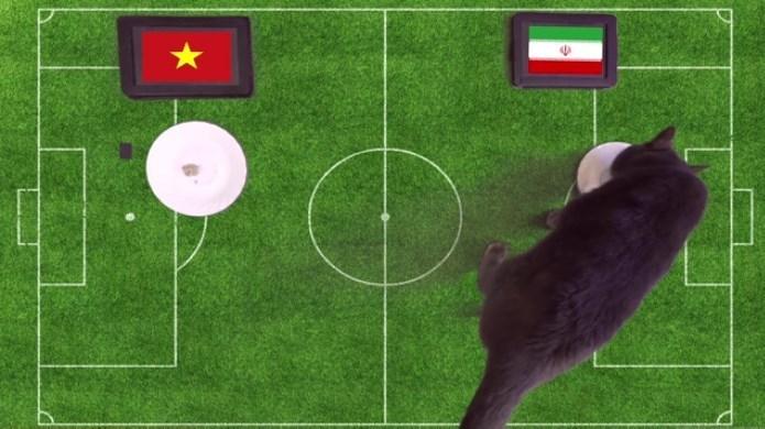 گربه پیشگوی جام جهانی ۲۰۱۸ برنده بازی ایران و ویتنام را پیشبینی کرد (+عکس)