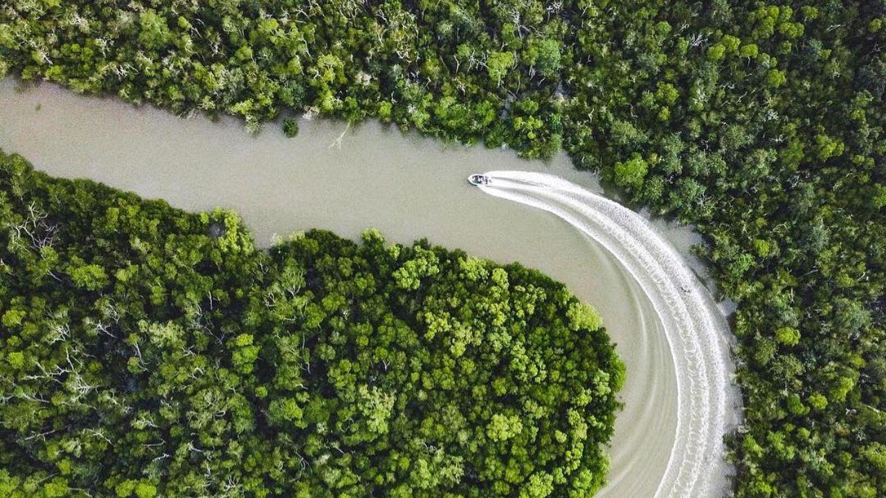 مانگروهای استرالیا (عکس)