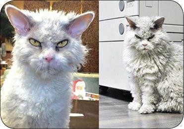عصبانی ترین گربه دنیا (+عکس)