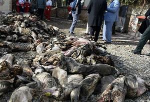 از قاچاق گوشت به خارج تا کشته دادن برای واردات گوشت!
