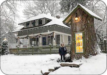 کتابخانه کوچک درختی (عکس)