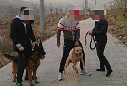 پارک، خانه شما نیست! سگها را ببندید/ با همین قوانین موجود نیز می توان از تردد سگ های خطرناک در معابر عمومی جلوگیری کرد