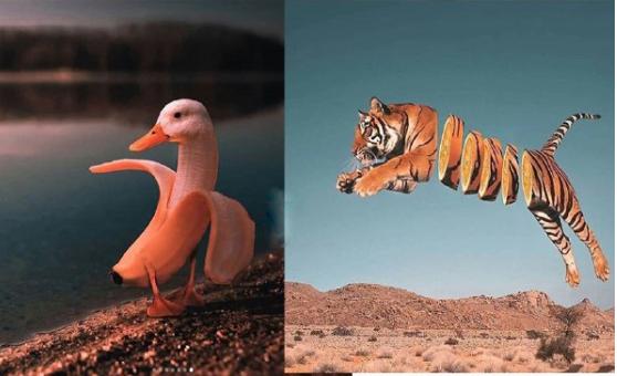 خلاقیت جالب یک عکاس در طراحی عکس حیوانات