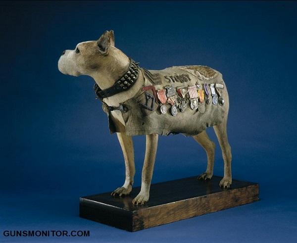 گروهبان استابی؛ مهمترین سگ جنگ جهانی!(+تصاویر)