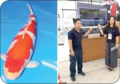 گران قیمت ترین ماهی زنده دنیا (+عکس)