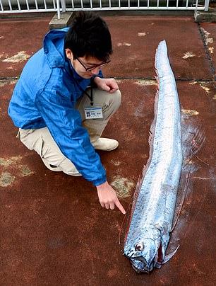 ماهیهای مرموز هشداری بر وقوع سونامی در ژاپن (+عکس)