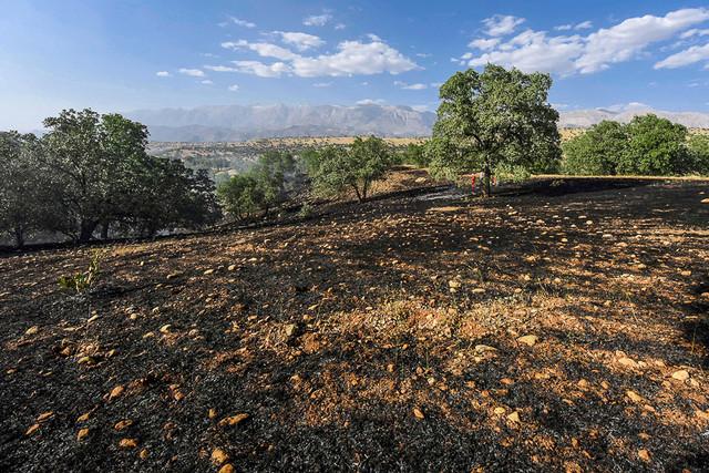 جنگلهای زاگرس رو به نابودی