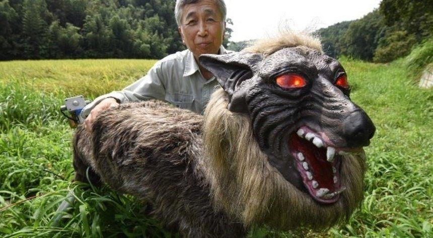 روش جالب ژاپنیها برای محافظت از زمینهای کشاورزی (+عکس)