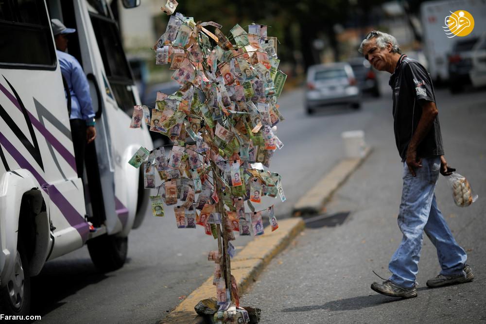 درختِ پول در ونزوئلا (+عکس)