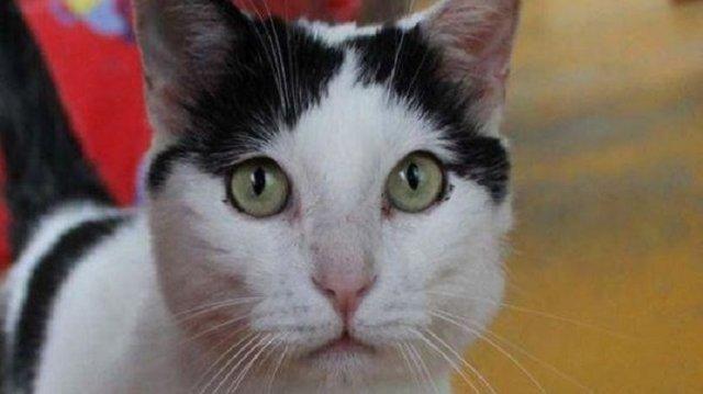 گربه خوششانس وارث پیرزن ایتالیایی! (+عکس)