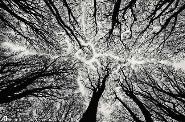 وقتی درختان