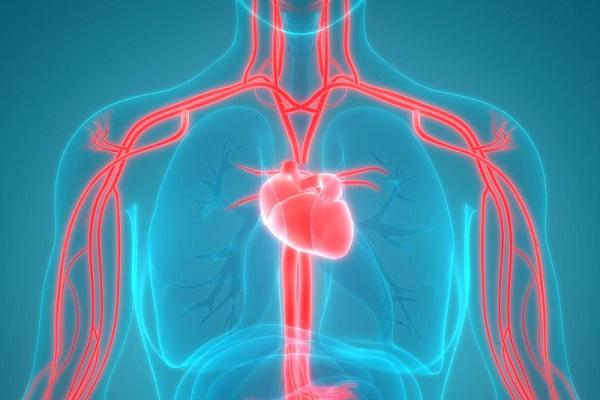 آنتی اکسیدانی برای جوانسازی رگهای خونی