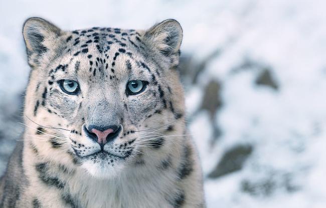 حیواناتی که در خطر انقراض قرار دارند (+عکس)