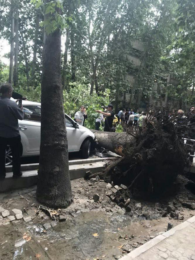 سقوط درخت در خیابان ولیعصر تهران براثر وزش باد (عکس)