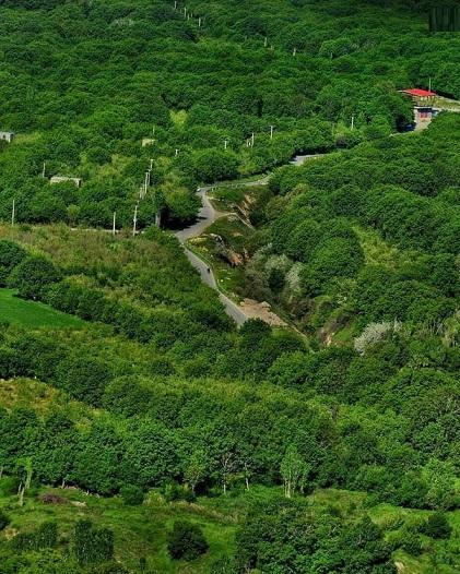 طبیعت سرسبز جادهی روستای دهبوره شهرستان نهاوند (عکس)