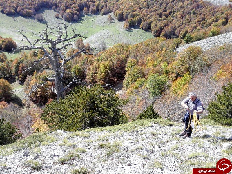 پیرترین درخت اروپا (+عکس)