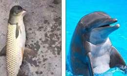 صید ماهی عجیب با سر دلفین در چین (+عکس)