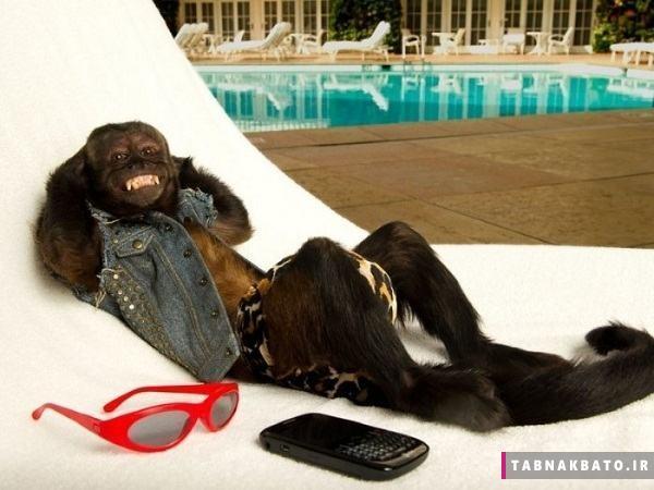 ثروتمندترین میمون جهان و درآمد هنگفتش! (عکس)