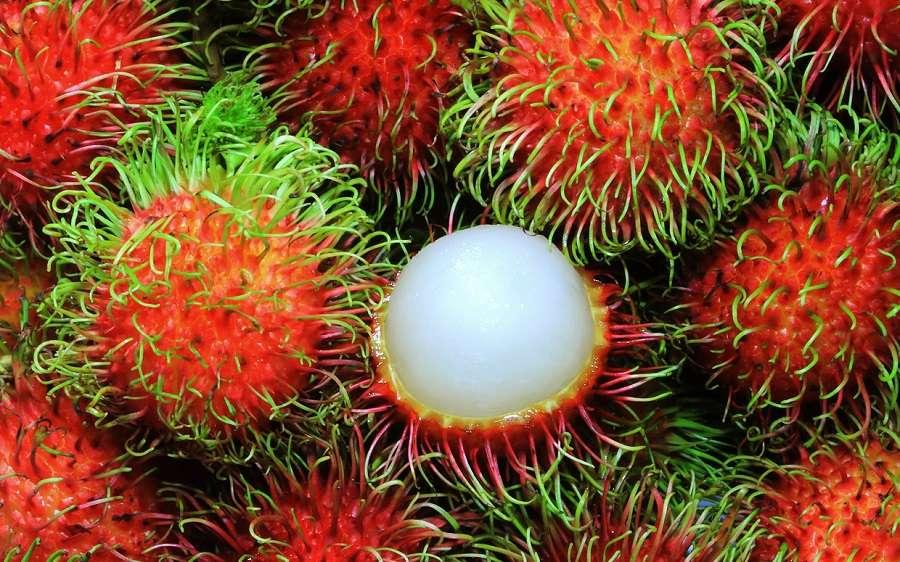 عجیبترین میوههای جهان (+عکس)