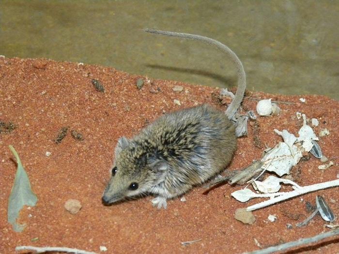 کوچکترین پستانداران دنیا را بشناسید (+عکس)