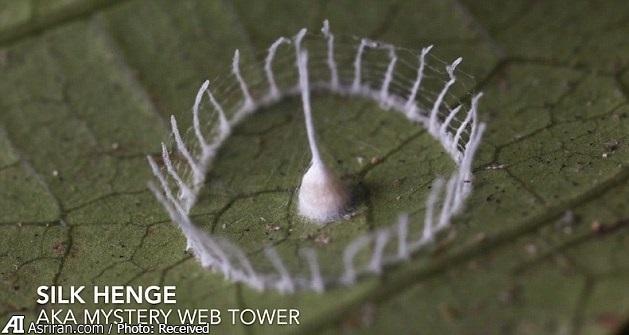 دژ عجیب و غریب یک عنکبوت ناشناخته! (+تصاویر)