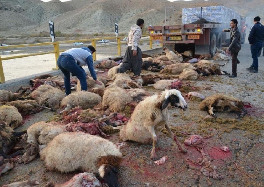30 راس گوسفند در تصادف جاده ای خراسان شمالی تلف شد (+ عکس)
