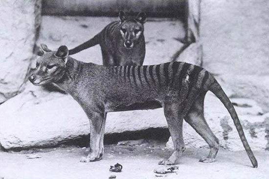 بازگشت جانوران منقرض شده به لطف فناوریهای نوین