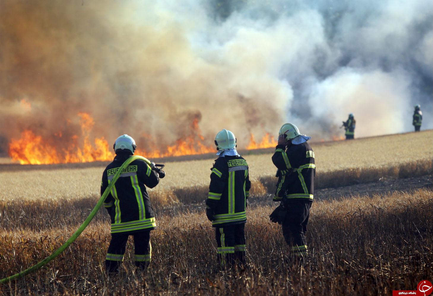 پرندهای که یک مزرعه را به آتش کشید! (+عکس)