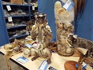 انبار مخوف حیات وحش در کلرادو (+عکس)