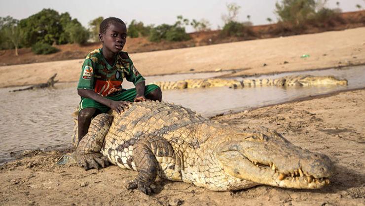 دوستی پسر بچه با یک تمساح (+عکس)