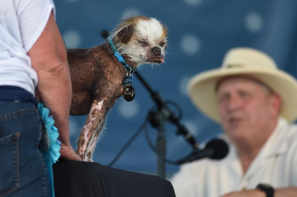 زشتترین سگهای دنیا /عکس