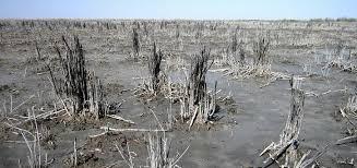 تصویب رهاسازی آب از سوی ایران در بخش عراقی هورالعظیم