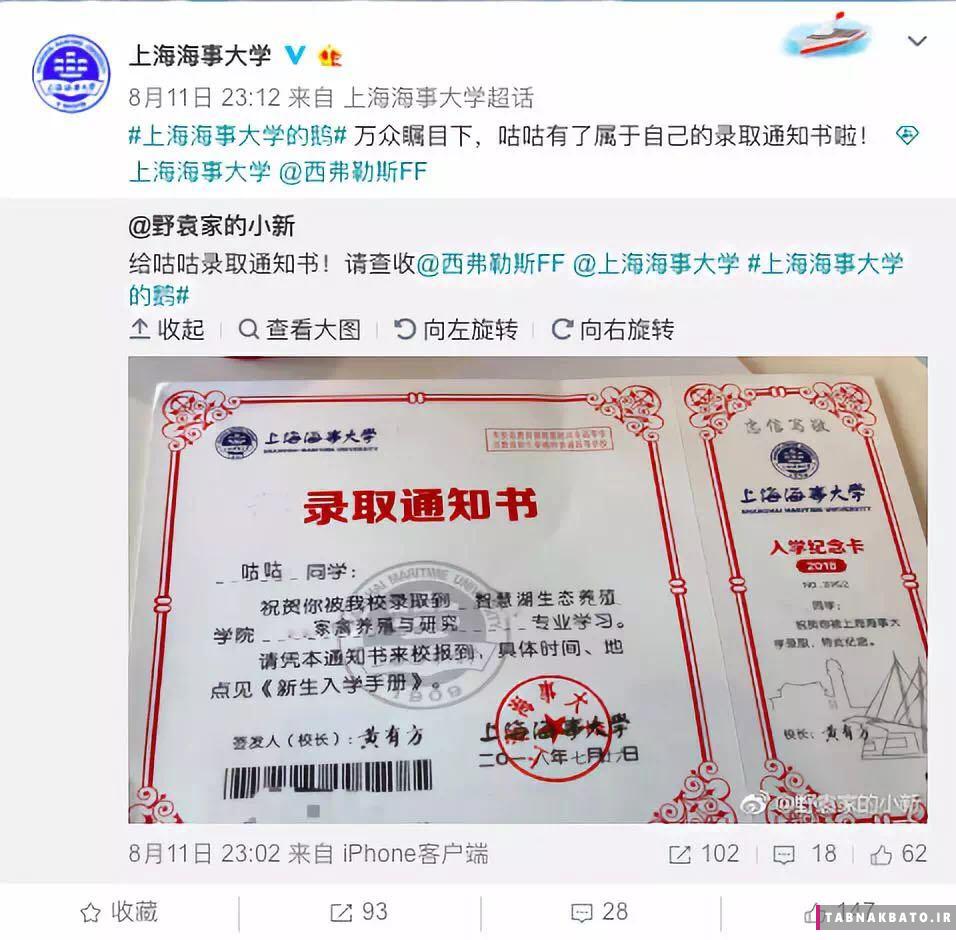 پذیرش یک غاز در دانشگاه شانگهای چین (+عکس)