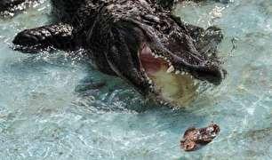 پیرترین تمساح جهان درگذشت! (عکس)