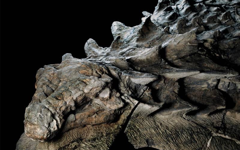 کشف دایناسور 130 میلیون ساله در چین (+عکس)